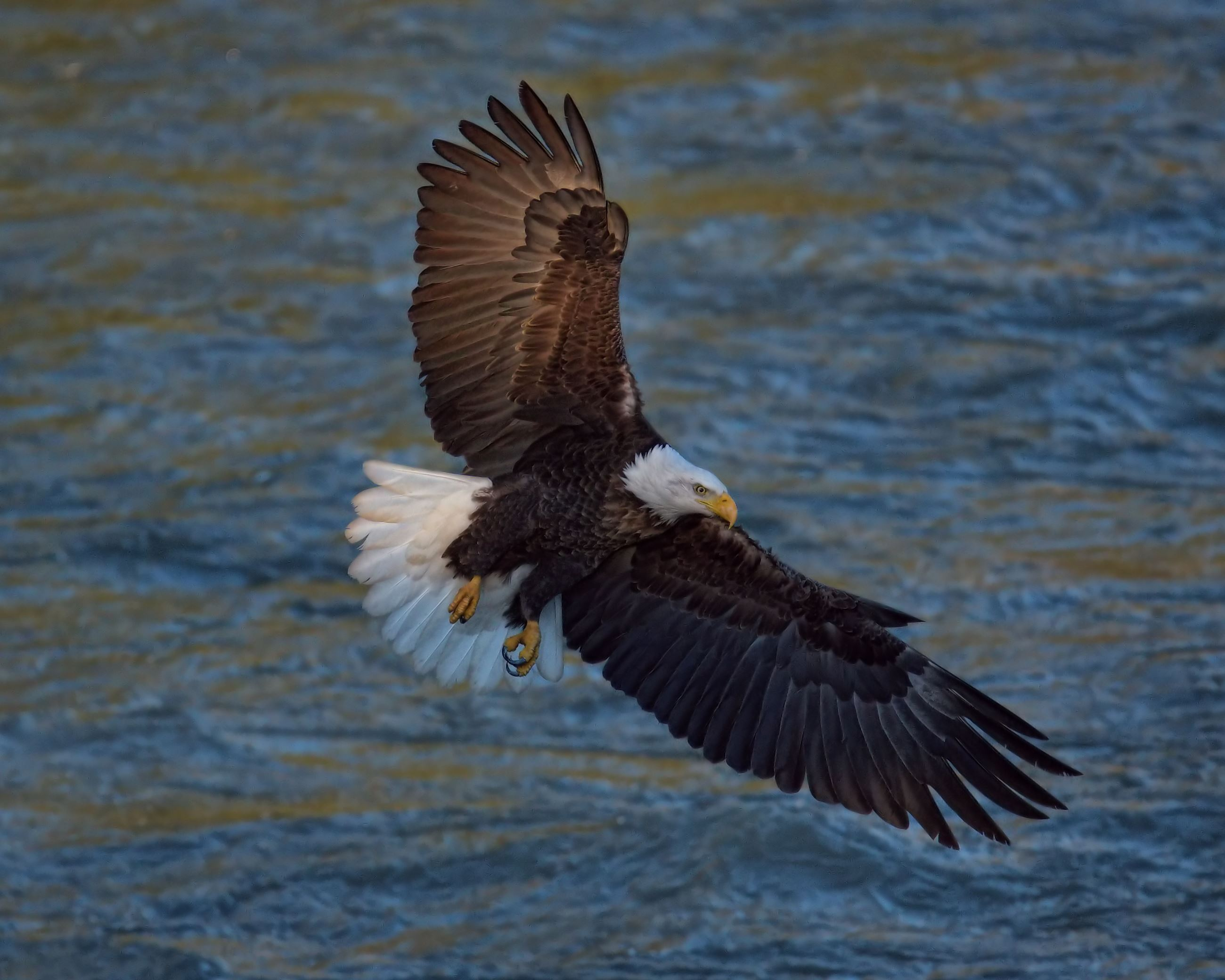 2018 eagle photo winner Debra Hoskins